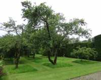 Levens Hall orchard