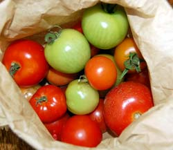 homegrown tomatoes ripening in a brown paper bag