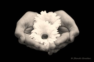 flowers cupped in hands