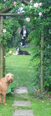 dogs on lawn