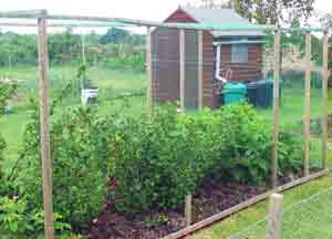 Good Garden Netting Choices for Green Gardening