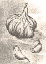 garlic with loose cloves drawing