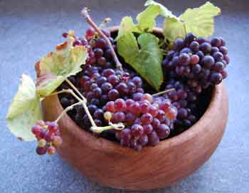 home grown grapes in a bowl
