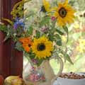 green gardening - sunflowers are an asset for birds and humans