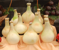 onions grown for showing