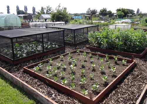 well made raised beds