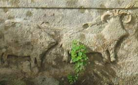 natural and organic foods - prehistoric sheep at Tarxian, Malta