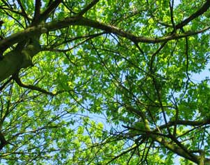 trees cast shade from leafy canopy