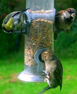 three birds enjoying the bird feeder