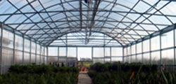 big greenhouse