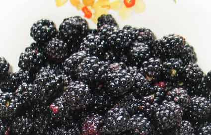 fresh wild blackberries