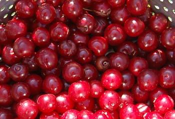 fresh fruit salad recipes: fresh homegrown cherries