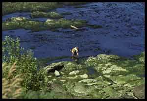 A woman harvesting seaweed in Chile