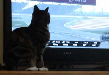 cat watching a screen